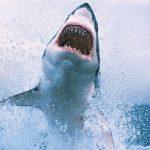غرائب مثيرة عن أسماك القرش