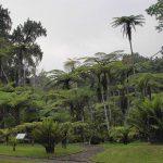 رحلة إلى حديقة تشيبوداس العامة