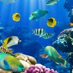غرائب و عجائب عن الأسماك