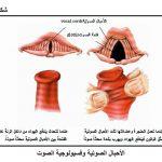 اسباب التهاب الأحبال الصوتية وكيفية علاجها