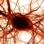 الأمراض التي تعالج بواسطة الخلايا الجذعية