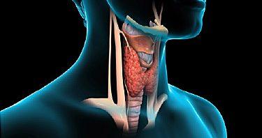 اضرار الغدة الدرقية الخاملة %D8%A7%D9%84%D8%BA%D