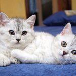 غرائب قد تعرفها لأول مرة عن القطط