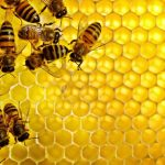 حقائق انقراض النحل وعلاقة ذلك بعلامات الساعة