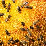 الطرق الأمنة للتخلص من خلية النحل