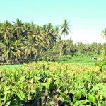 أهمية سهل صلالة في دعم انتاجية القطاع الزراعي بالسلطنة