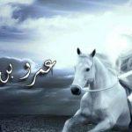 مواقف من تعاملات عمرو بن العاص مع الاقباط