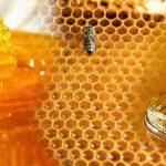 فوائد عسل النحل على الريق لمرضى الكبد