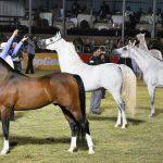 أفضل ميادين سباق الخيول العالمية