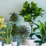 طريقة زراعة نباتات الزينة