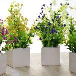 أهم 10 نباتات يمكن وضعها في غرفة النوم