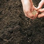 طريقة زراعة البذور بالمنزل