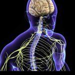 كيفية الحفاظ على صحة الجهاز العصبي