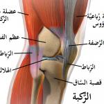 الفرق بين الرباط الصليبي الامامي والخلفي للركبة