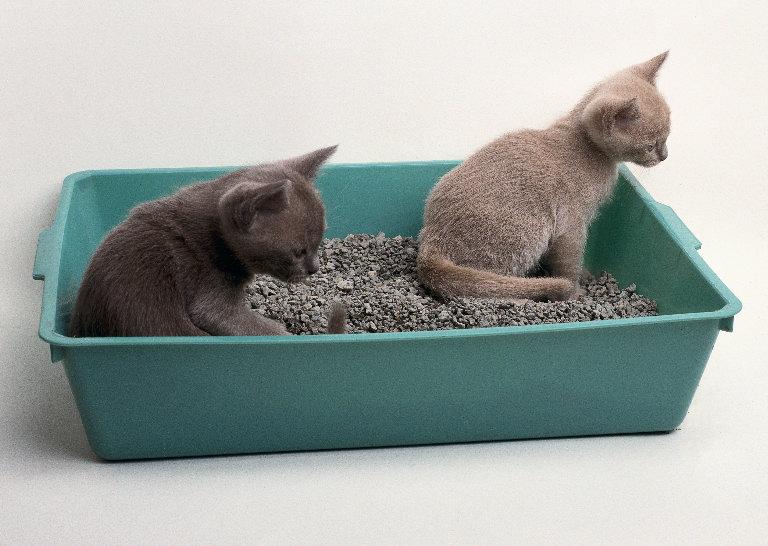 الرمال الطينية  للقطط