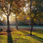 الطبيعة في ساكرامنتو - 565786