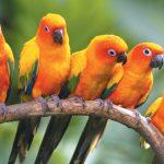 الطيور الاستوائية في منتزه يورونغ للطيور - 561858