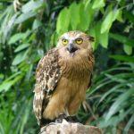 الطيور الجارحة في منتزه يورونغ للطيور - 561861