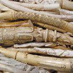 كيفية التفريق بين العاج و العظام