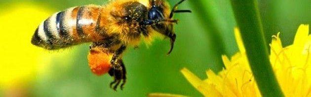 حقائق النحل