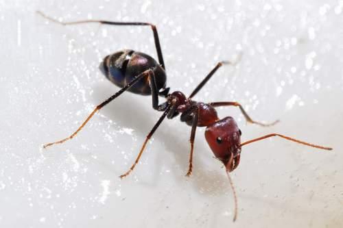 تفسير رؤية النمل في المنام لابن سيرين المرسال