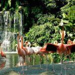 جولة داخل منتزه يورونغ للطيور بسنغافورة