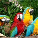 جنة الببغاوات في منتزه يورونغ للطيور - 561857