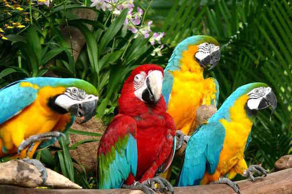 جنة الببغاوات في منتزه يورونغ للطيور