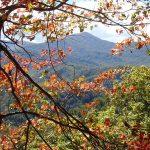 حديقة غريت سموكي ماونتينز الوطنية في أمريكا