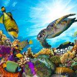 حوض السمك الوطني في بالتيمور - 563143
