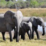 تفسير رؤية الفيل في المنام لابن سيرين