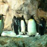 ساحل البطريق في منتزه يورونغ للطيور - 561860