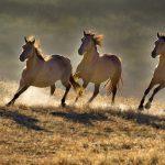 كم تبلغ سرعة الحصان