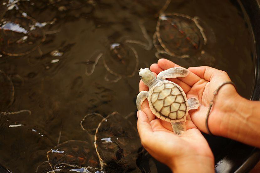 محمية السلاحف