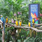 منتزه يورونغ للطيور في سنغافورة - 561854