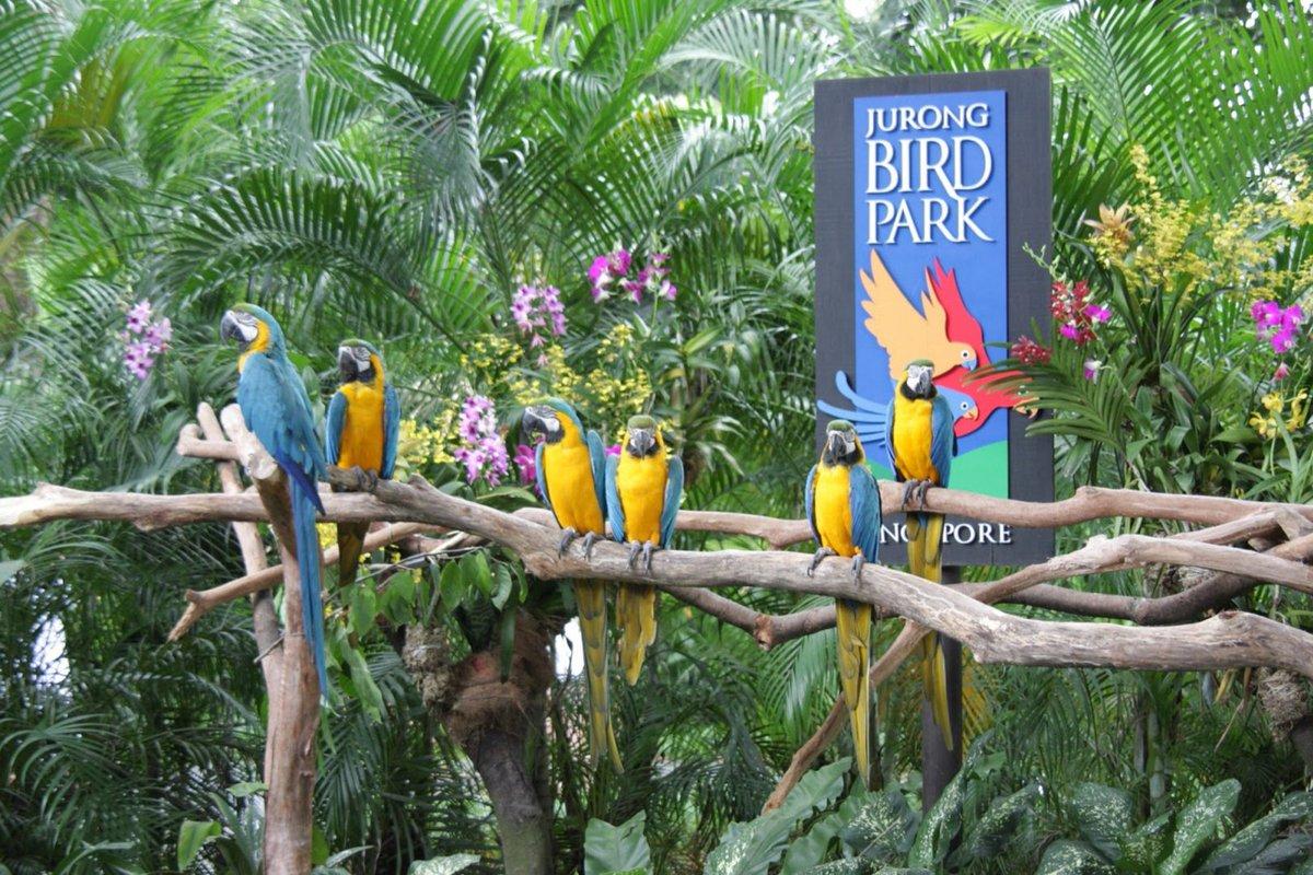 منتزه يورونغ للطيور في سنغافورة