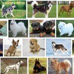 بالصور أغلى وأفضل 5 أنواع من الكلاب حول العالم