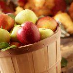دراسة جامعة كورنيل عن فوائد التفاح