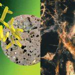 مقارنة بين البكتريا والفطريات