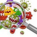 الفرق بين البكتيريا والفيروسات