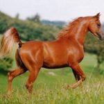 طرق الوقاية و علاج الاصابة بالاسهال عند الخيول