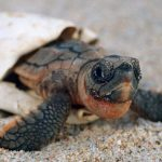 معلومات عن أنواع السلاحف و كيفية تكاثرها