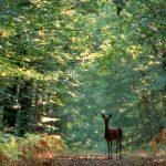 بحث عن أهمية الغابات وعوامل تدهورها