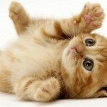 امراض تصيب القطط المنزلية وكيفية علاجها