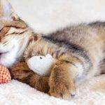 حقائق مدهشة عن سلوكيات القطط في النوم