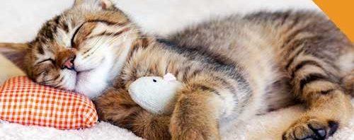 حقائق مدهشة سلوكيات القطط النوم