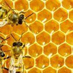 الأمراض التي تصيب النحل وطرق علاجها