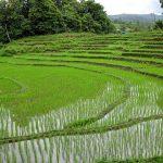 مطويات عن أهمية الزراعة