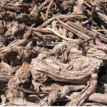 معلومات عن أنواع الحطب وإستخداماته