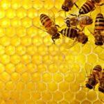 مقارنة بين مملكة النمل ومملكة النحل